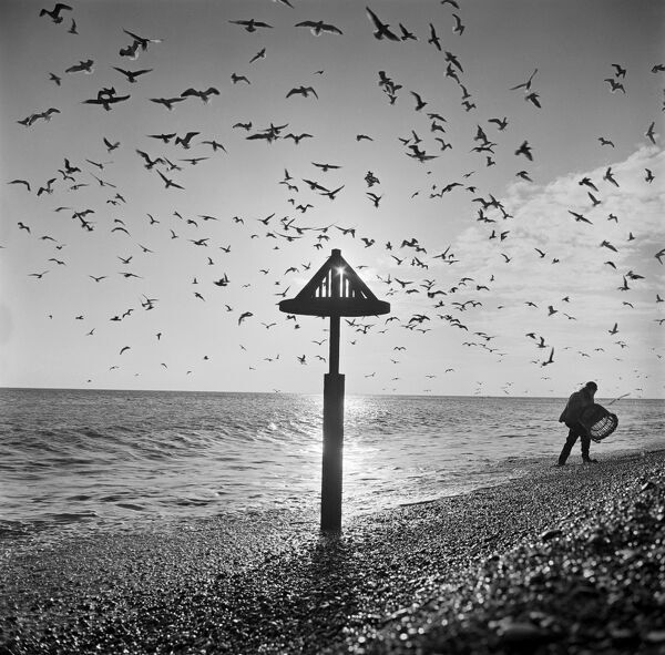 ALDEBURGH BEACH, Aldeburgh, Suffolk. Fisherman tipping a wicker basket at the sea's edge with gulls wheeling overhead and a sea mark in the foreground. Photographed by John Gay in 1977