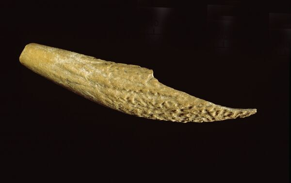 SILBURY HILL, Avebury, Wiltshire. Antler tine tool from May 2001 excavations