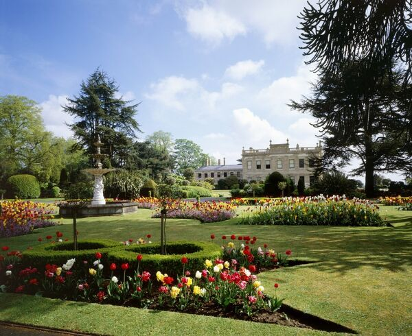 BRODSWORTH HALL AND GARDENS, South Yorkshire. View of gardens and fountain looking towards the house. Tulips in bloom