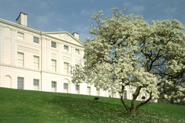 KENWOOD HOUSE, London. Exterior view, south front. Magnolia tree with house in the background