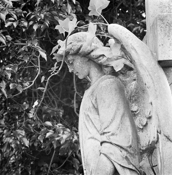 HIGHGATE CEMETERY, West Cemetery, London. The statue of an angel in thought, on the tomb of V W J Adamson. Photographed by John Gay during the early 1980s