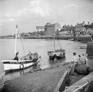 Whelk boats, Norfolk AA98_14631
