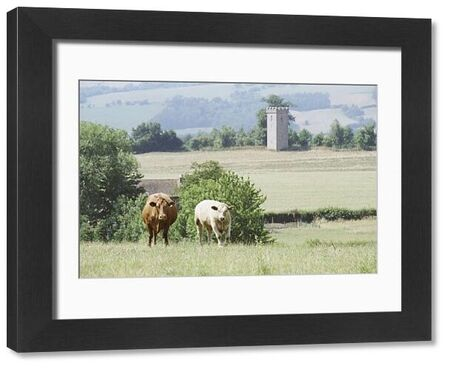 Picturesque view of rural Herefordshire with cows in foreground and disued tower beyond. IoE 153698