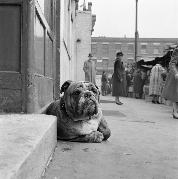 A bulldog lying by a doorstep in the foreground, with people at stalls at a street market behind, possibly Inverness Street, Camden Town, London. Photograph by John Gay. Date range: 1960-1965