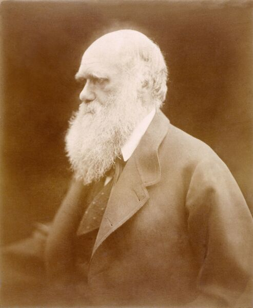 DOWN HOUSE, Downe, Kent. Photograph of Charles Darwin by Julia Margaret Cameron (1815-79)