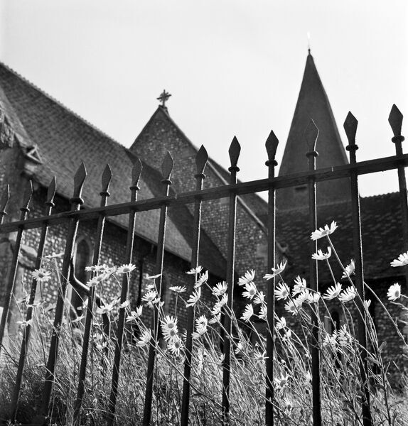 Looking up through spear-headed railings with large daisies growing through them, towards the gables, roofs and spire of a flint-faced church in the Chichester area, West Sussex. Photographed by John Gay. Date range: 1950-1965