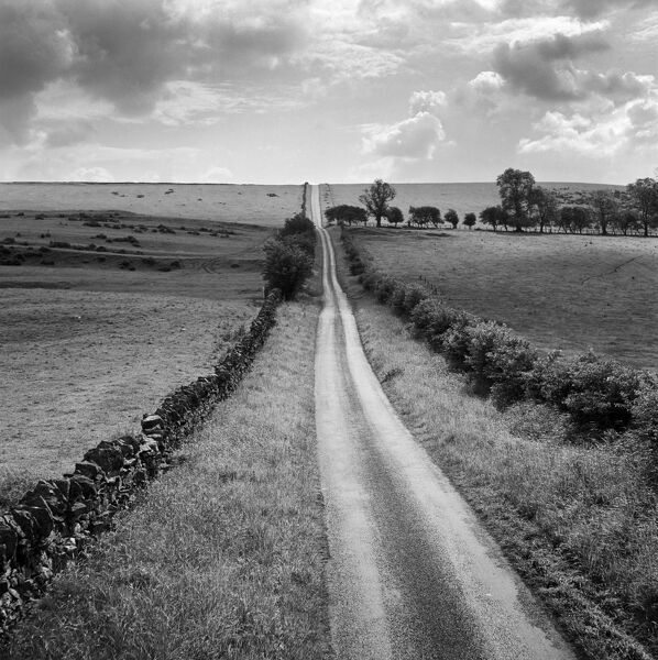 A long straight country road near Stamfordham, Northumberland. Photographed by John Gay during the 1950s