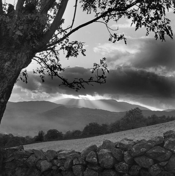 Lake district landscape, Cumbria. Sun behind dark cloud with tree and stone wall in the foreground. Photographed by John Gay c.1956