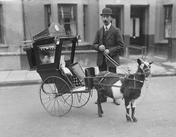 A goat-drawn carriage for children, somewhere in London. We don't know why, when or where the photograph was taken, nor the identities of the man and little girl. The only information we have is the name and address of Edward Willman, a watch
