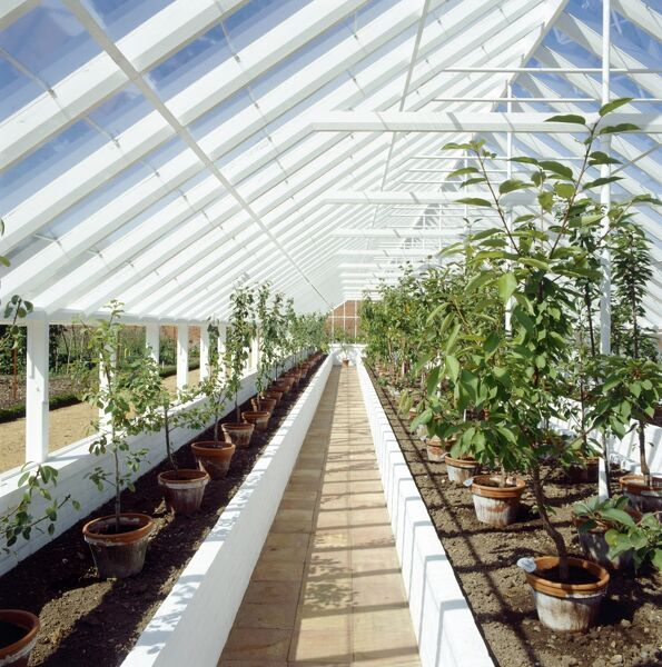 AUDLEY END HOUSE AND GARDENS, Saffron Walden, Essex. The kitchen garden in August. Interior of the orchard greenhouse