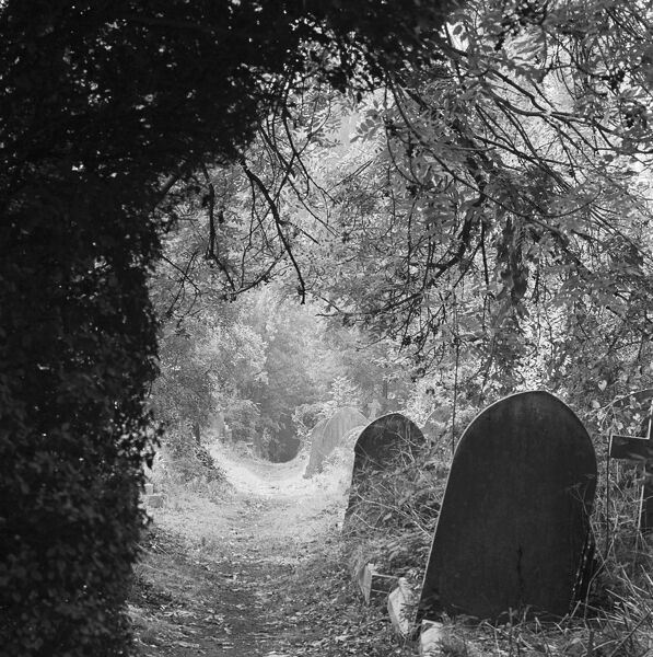 HIGHGATE CEMETERY, London. A tree covered path and grave stones. Photographed by John Gay in the early 1980s