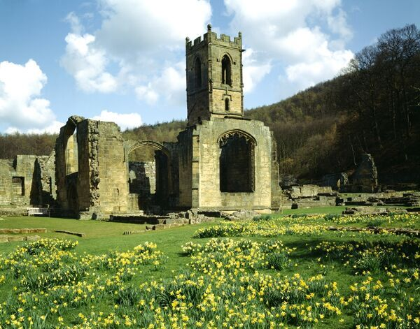 MOUNT GRACE PRIORY, North Yorkshire. View of the Priory Church from the South West with daffodils in the foreground