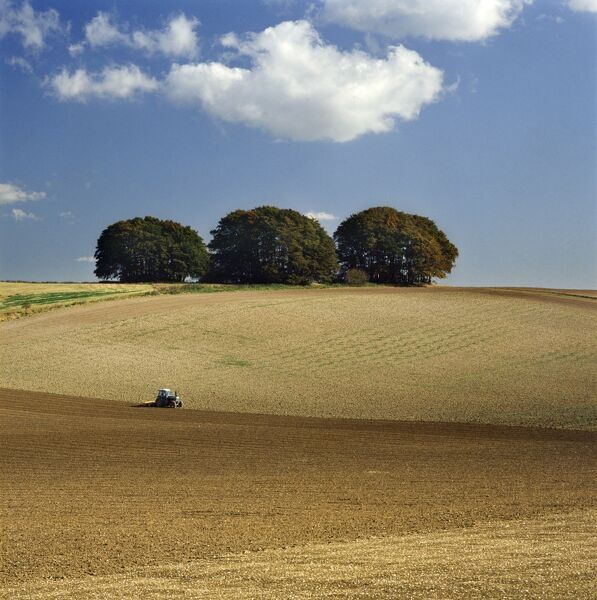 THE RIDGEWAY, Wiltshire. The Downs south of Avebury. Rural landscape with tractor in field and corpse of trees on the horizon