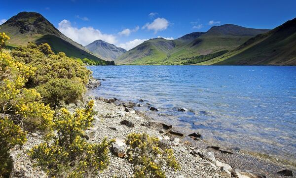 WAST WATER, Lake District National Park, Cumbria. Shoreline of the lake with gorse bushes and mountains in the distance. View towards Scafell