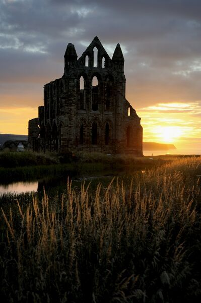 WHITBY ABBEY, North Yorkshire. View of the abbey at sunset with orange light catching grasses