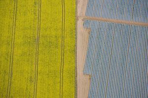 Agriculture in yellow and blue 24597_049