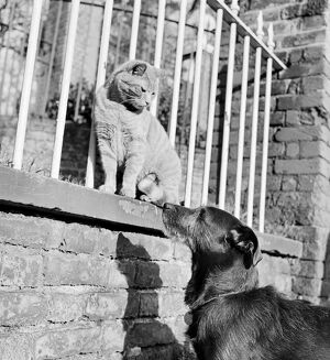 Cat and dog AA072439