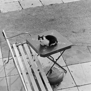 Cat on table AA075838