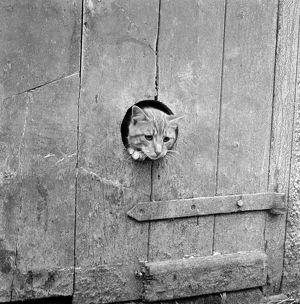 Cat window AA086660
