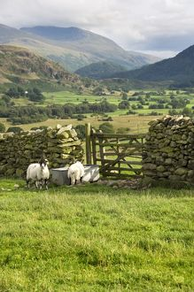 Cumbrian Fells N060252