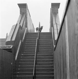 Dog standing at the top of railway footbridge AA071511