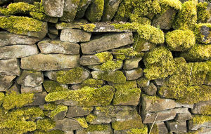 Dry stone wall DP005708