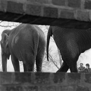 Elephants AA098723