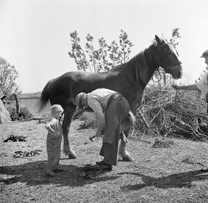 Farrier, Cambridgeshire AA98_10862