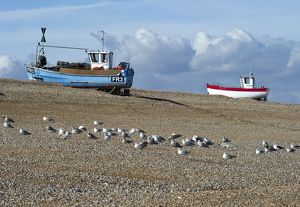 Fishing boats, Dungeness Beach N100296