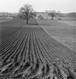Ploughed field AA079453