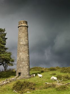 Powder Mills, Dartmoor N071128