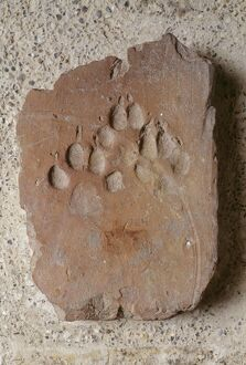 Roman tile with dog paw imprint K030449