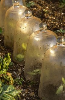 Row of bell cloches M070037