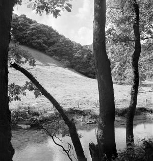 Wooded riverbank AA074158